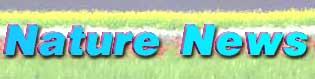Nature News �i�������[���}�K�W���j